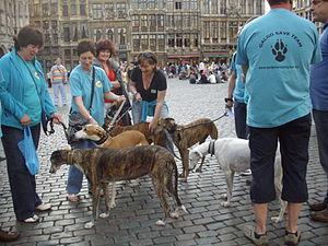 English: A dog activist group has assembled at...
