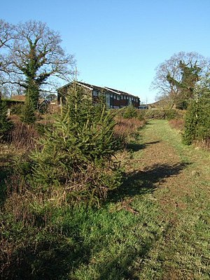 English: Christmas Tree Farm