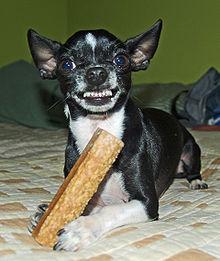 https://i1.wp.com/upload.wikimedia.org/wikipedia/commons/thumb/f/fc/Do_not_take_his_bone.jpg/220px-Do_not_take_his_bone.jpg?w=720
