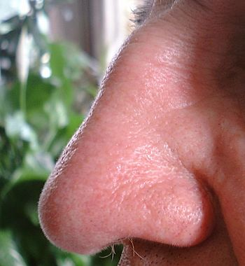 English: A profile of a beautifully shaped hum...