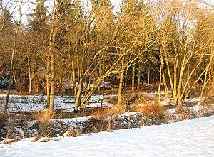 English: Winter sunshine Carpenters Down Wood ...