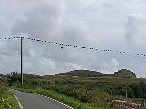 English: Birds on a wire The road is the B8009...