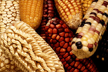 To increase the genetic diversity of U.S. corn...