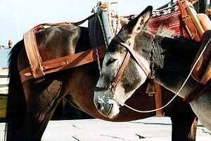 Donkeys on Hydra, Greece