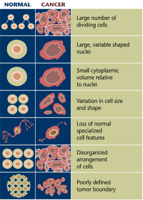 Normal cancer cell differences from NIH