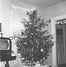 An unsheared Christmas tree in New York State ...