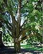 Cork tree.jpg