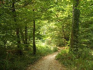 Maksimir Path