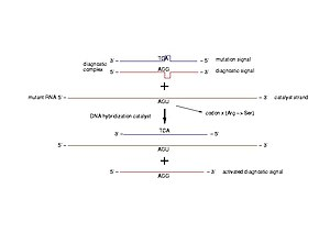 Diagnostic of pathogenic mutations. A diagnost...