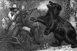 An Asian black bear, shot after charging the &...