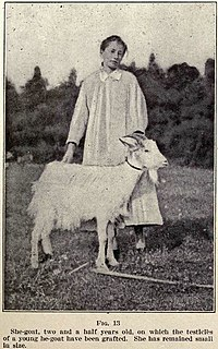 Pre-1920s doe with grafted testicles.