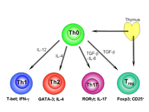 Th1-Th2-Th17-Treg origin