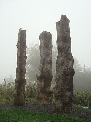 Emilie Brzezinski's Spruce Echos 2005