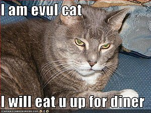 This is a evil lolcat.