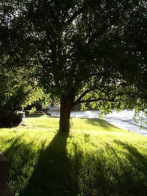 Tree front