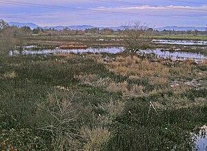 Laguna de Santa Rosa, the second largest wetla...
