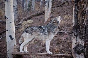 Katimik, a former inhabitant of Mission: Wolf ...