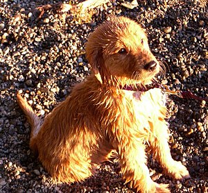 Soggy puppy