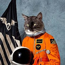 A cat is portrayed in a spacesuit in front of a flag.