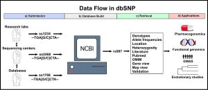 dbSNP  Wikipedia