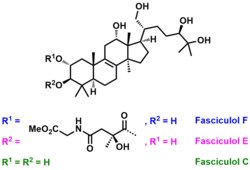 Chemical structures of fasciculols C, E and F