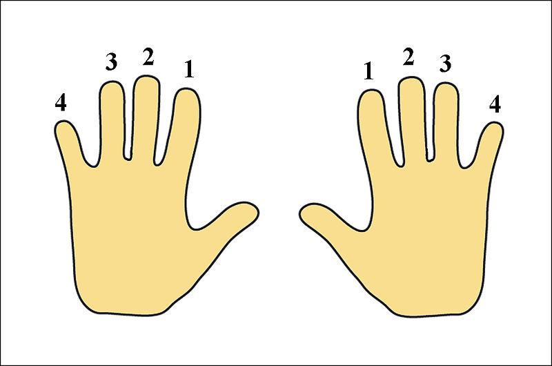 Datoteka:Prsti leve i desne ruke.jpg