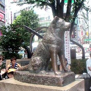 Bức tượng bằng đồng Hachikō tại nhà ga Shibuya