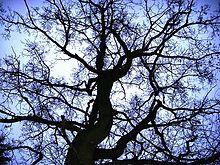 Baum im Sturm.JPG