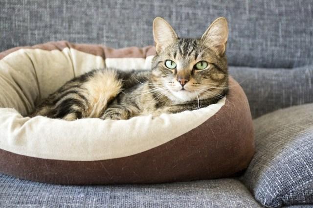 Housing cat