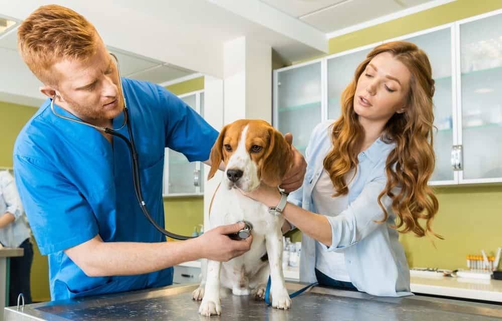 Veterinary Pets