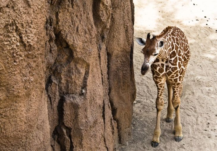 Dallas Zoo