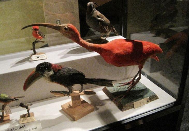 Pink Palace Museum Memphis TN