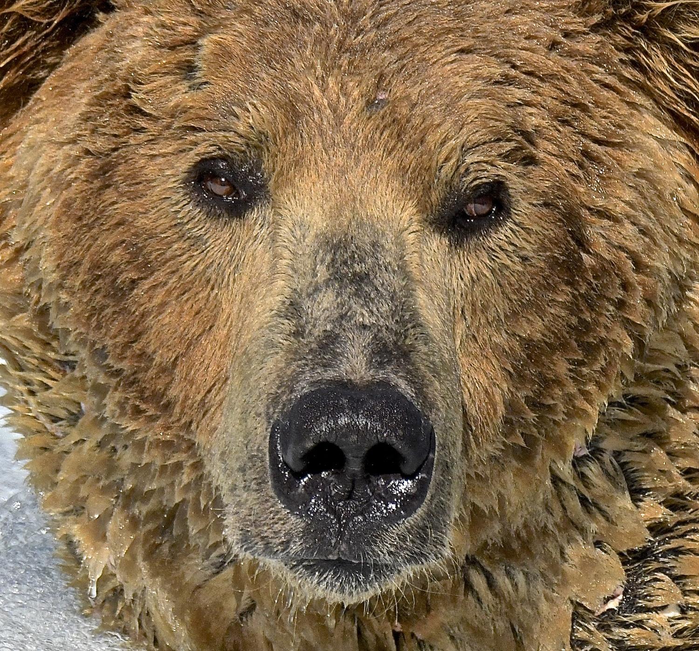 A Facial Portrait Of Our Beloved Otis 480 7 1