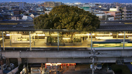 The Japanese Train Station Built Around a 700-Year-Old Tree