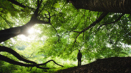 Can trees heal people?