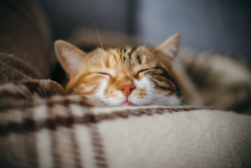 Calm cat resting peacefully