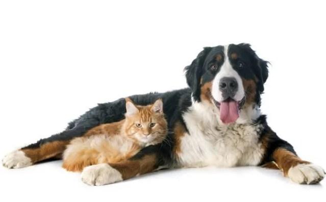 Gato a cachorro juntos
