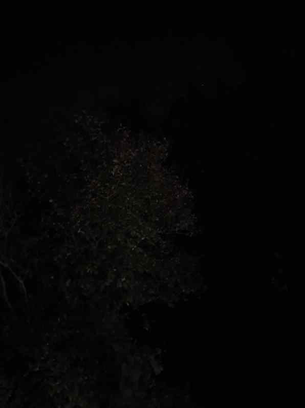 Kuvattu ilman yötilaa