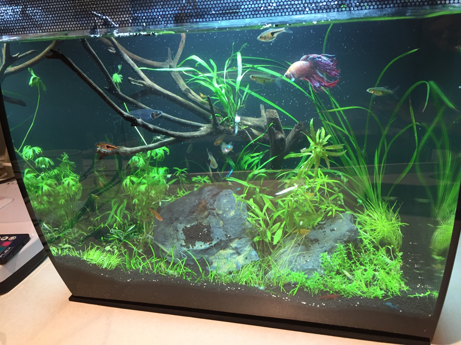 Fluval Led Lights