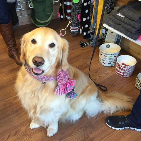 Meet & Greet with Therapy Dog in Westfield Saturday will ...