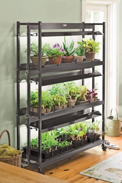 indoor gardening lights Successfully Transition Houseplants Indoors for Winter