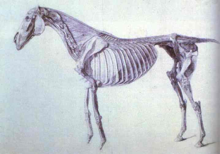 Diagram From The Anatomy Of The Horse George Stubbs Biblioklept