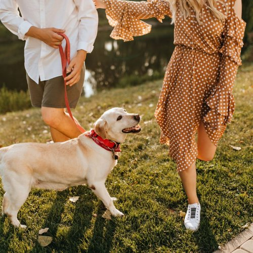 Dog Behaviour Problems – Common Solutions