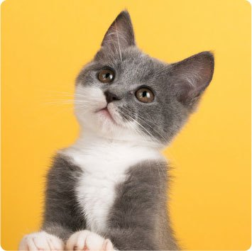UTI treatment for cats