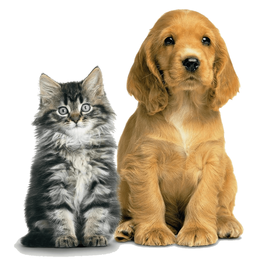 dog-supplements for-joints