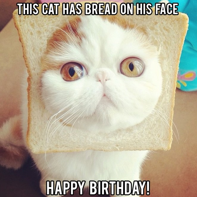 happy birthday funny cat meme