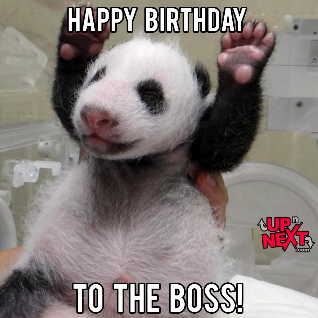 30?w=662 happy birthday boss meme 20 funny boss birthday memes images