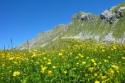 Flowers Trail in Stura Valley
