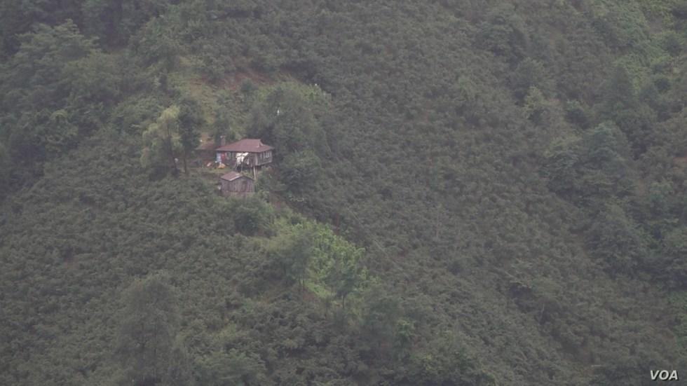 The steep valleys of Turkey Ordu province makes harvesting the nut a hard and often dangerous job. (D. Jones/VOA)