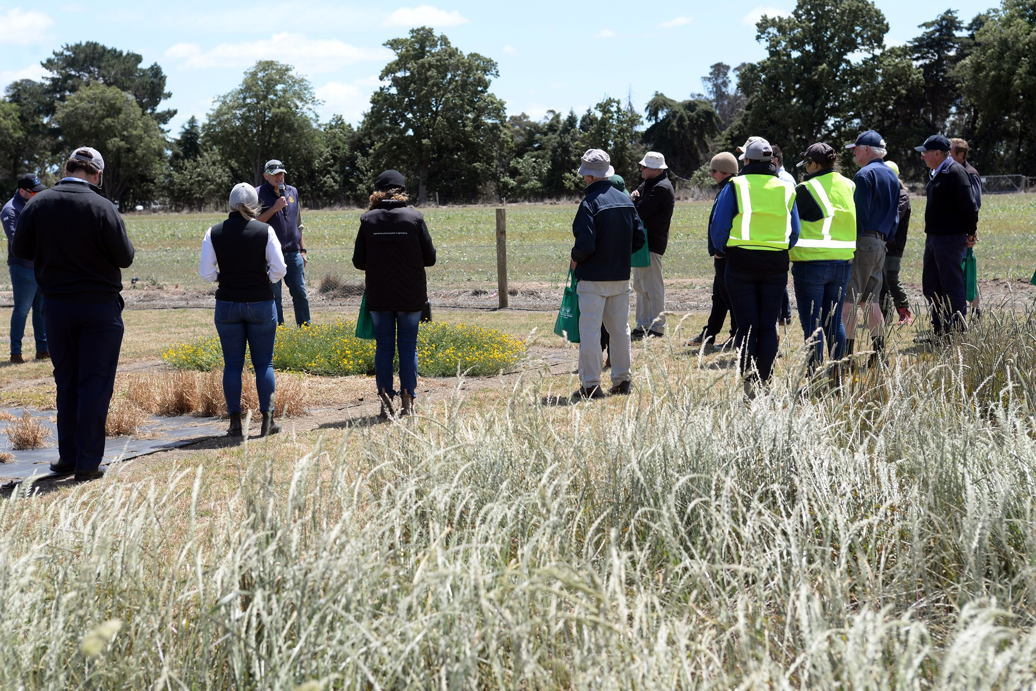 Group of people inspecting pasture